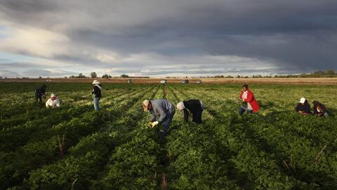 La fuerza laboral de Estados Unidos cada vez depende más de la mano de o...