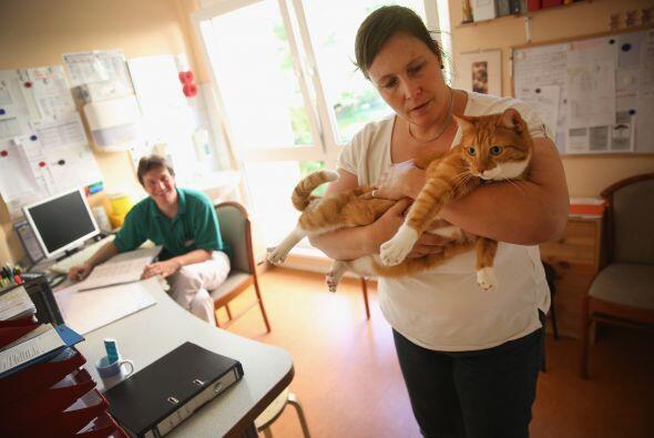 Convivir con los gatos es una gran terapia para los residentes del asilo...