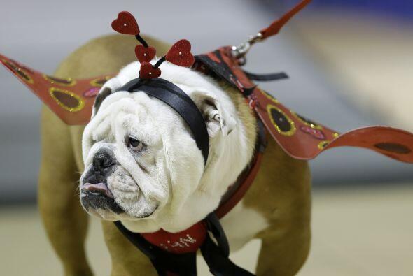Algunos traían 'outfits' muy divertidos, todos competían por ser el perr...