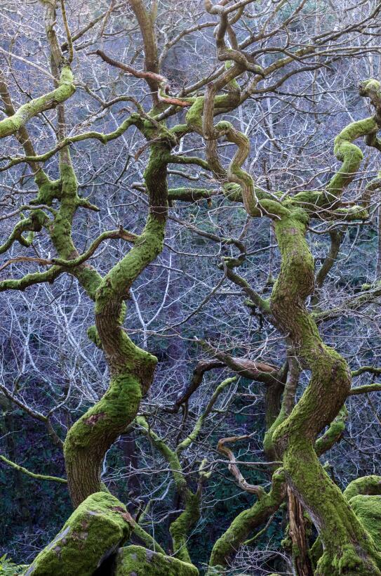 'Verde Retorcido', fotografía tomada en Derbyshire, Inglaterra. Ganador...