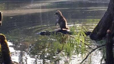 La foto fue capturada en el Ocala National Forest.