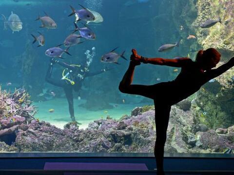 Un instructor de yoga hace sus movimientos dentro del tanque de agua de...