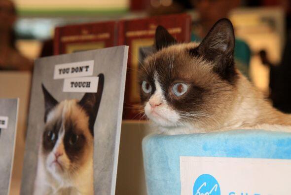 El gato más famoso de las redes sociales hizo su aparición en la feria d...