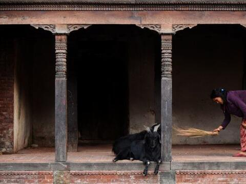Un nepales reside dentro de las instalaciones del templo de Pashupatinat...