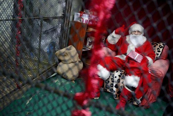 Un Papa Noel permanece encerrado en el zoo de Praga, República Ch...