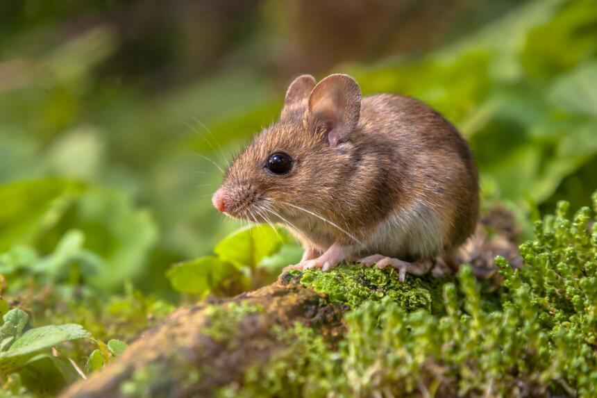 Nueva Zelanda reconoce los derechos de los animales