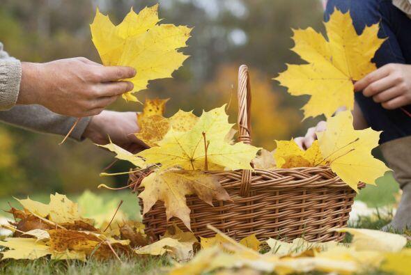 Llegó el otoño y hay muchas actividades para hacer con niños y pasarla g...