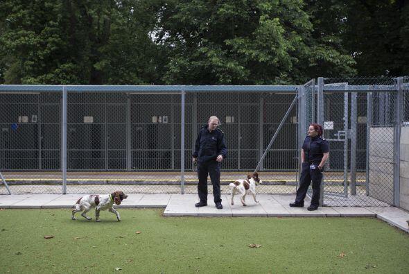 La mayoría de estos perros pertenecen  a las unidades caninas policiales...