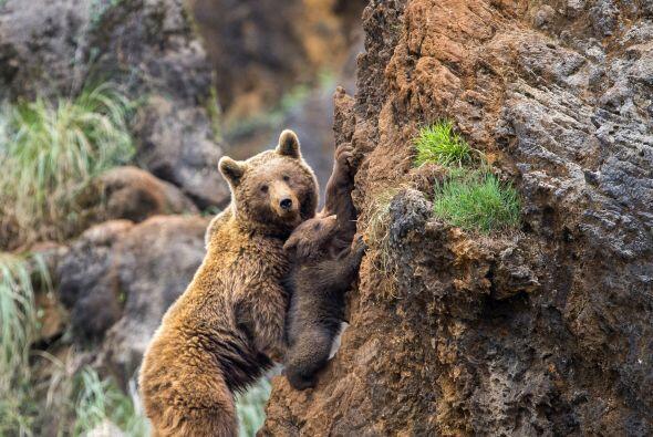 El pequeño debe aprender a escalar porque es una habilidad muy important...