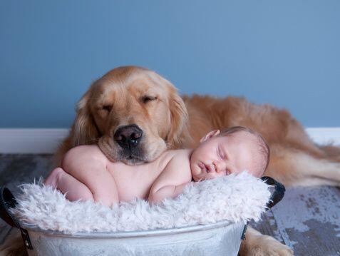 Tal vez ya te habías dado cuenta pero tener un perro disminuye el...