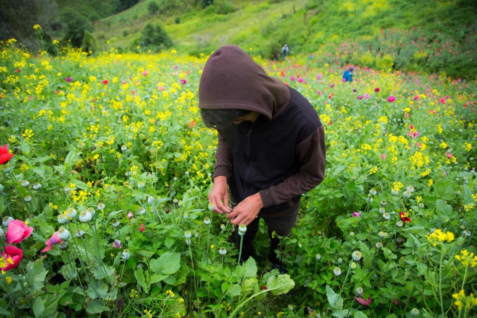 La mayoría de los que trabajan en estos campos son menores de eda...