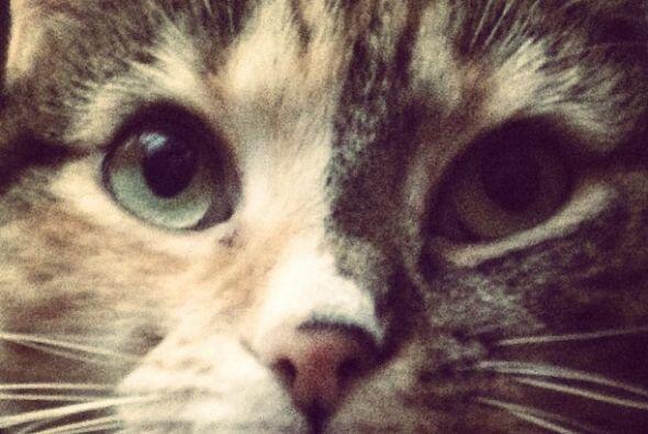 Sin duda, un amante de los felinos sin reparos.