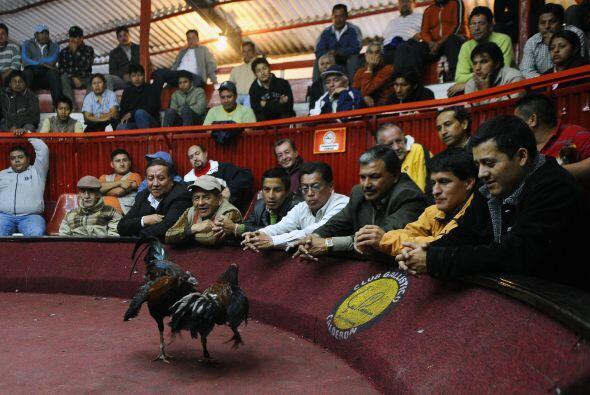El palenque de 'Los Revuelos', localizado en la ciudad de Calderón, es e...