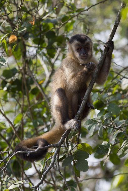 El humano comparte un 96% de su ADN con el chimpancé; los beb&eac...