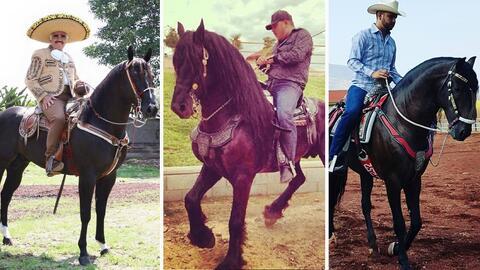 El gusto por los caballos es algo que comparten muchos cantantes del reg...