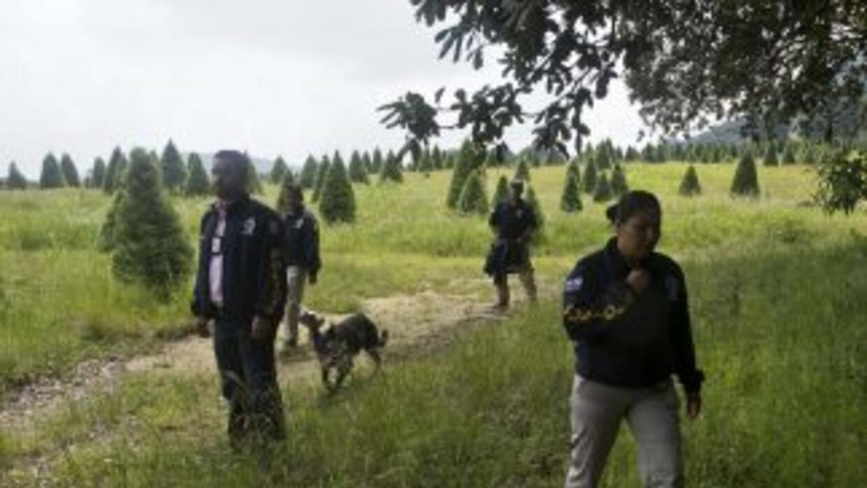 El trabajo de los peritos de la Procuraduría y la Policía en la fosa com...