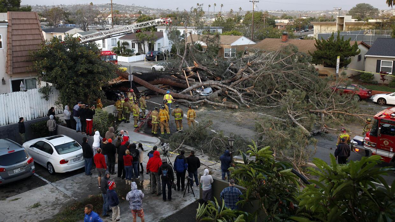 Árbol caído por culpa  del viento en Pacific Beach, CA