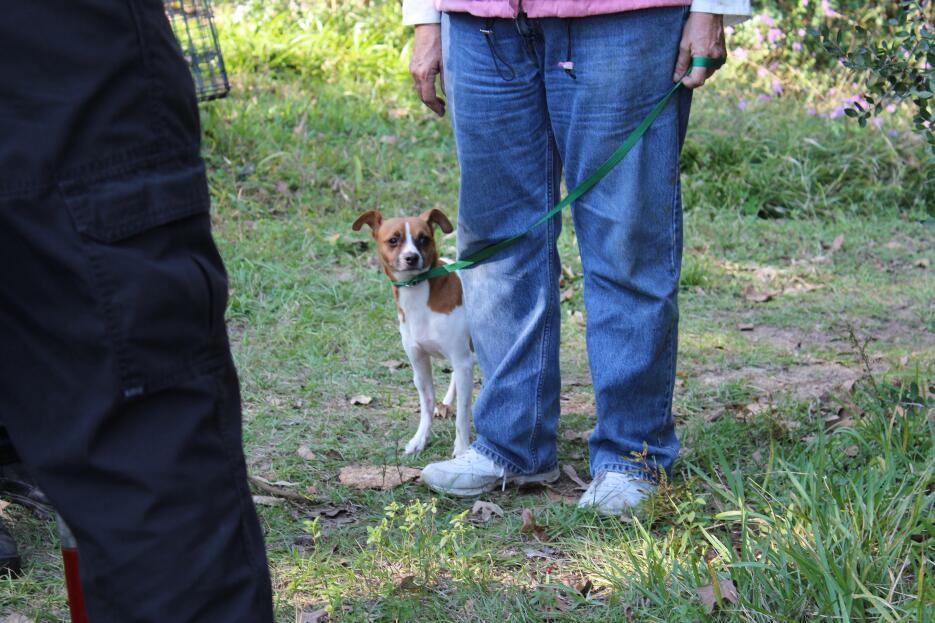 Entre orina y escombros, 49 animales son rescatados de una vivienda en T...