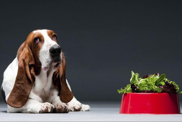 Expertos en nutrición canina aseguran que además de su com...