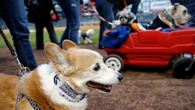 Fans de los White Sox viven un 'día de perros' en el Guaranteed Rate Field