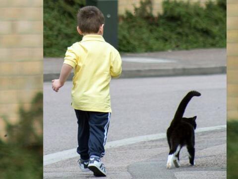 Gato ayuda a un niño a vencer la ansiedad que le provoca asistir...