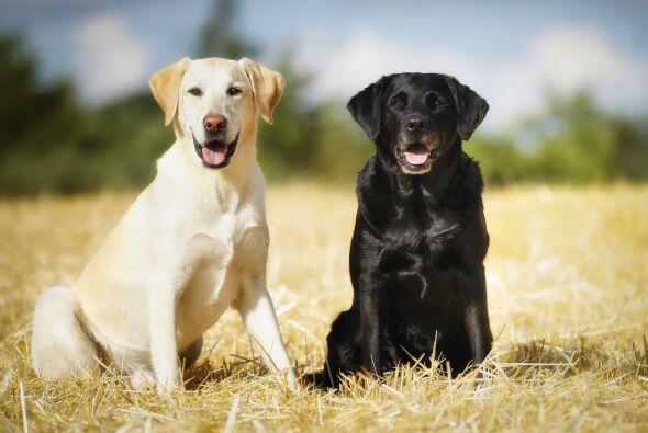 Hay razas de perros para todos los gustos. Sin embargo, no todas se dest...