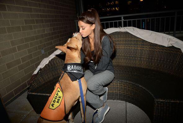 Los perros a los que apoya forman parte de la organización BADA**...
