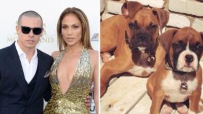 En diciembre pasado el perro, llamado 'Bear', es de raza boxer y al pare...