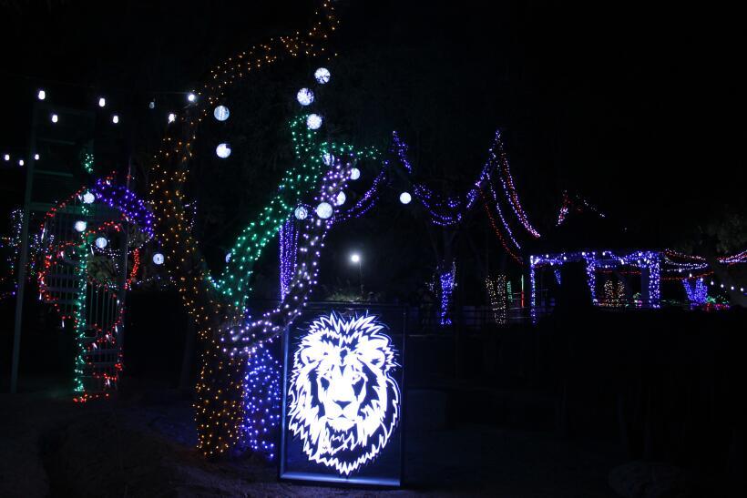 10 lugares para visitar en la temporada de invierno en Arizona zoolights...