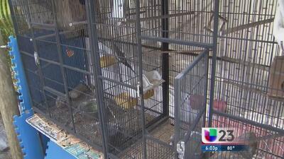 Dueña de aves robadas solo quiere que las devuelvan