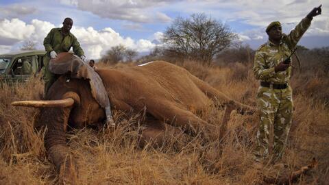 'Cazando' a los cazadores: una nueva tecnología ayuda a proteger los ani...