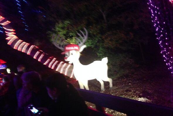 Todos quieren ser como Rudolph.