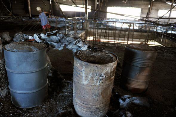 Para tres escuelas de samba, el incendio terminó con largas horas de tra...