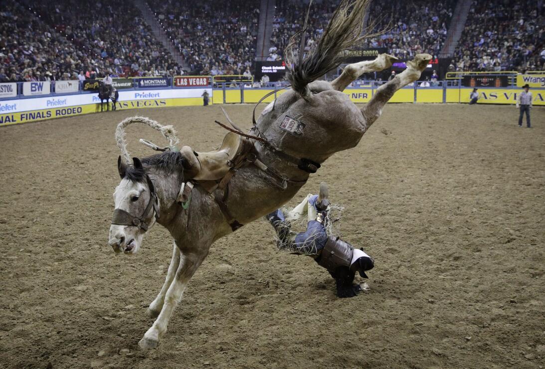 La rudeza e intesidad de los Nacionales de Rodeo en Las Vegas AP_1634318...