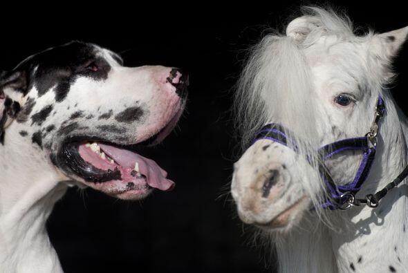 La amistad entre estos dos animales es adorable.