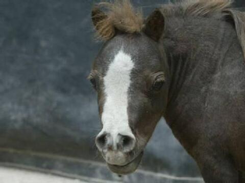 No es un juguete o un poni, ¡es el caballo más peque&ntilde...