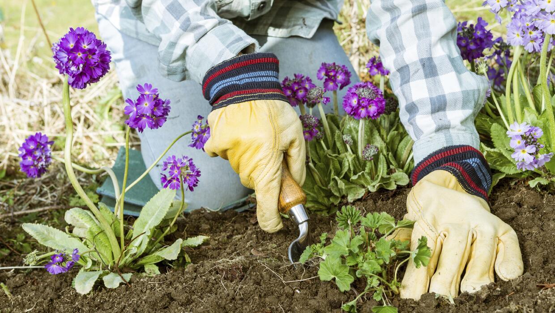 Devuélvele la vida a tu jardín después de un crudo invierno