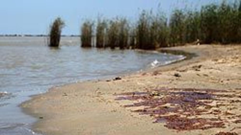 Corriente podría llevar crudo a los cayos de Florida de176568fc274c37af4...