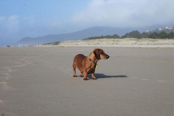 Ahora los paseos por la playa se han convertido en su pasatiempo favorito.
