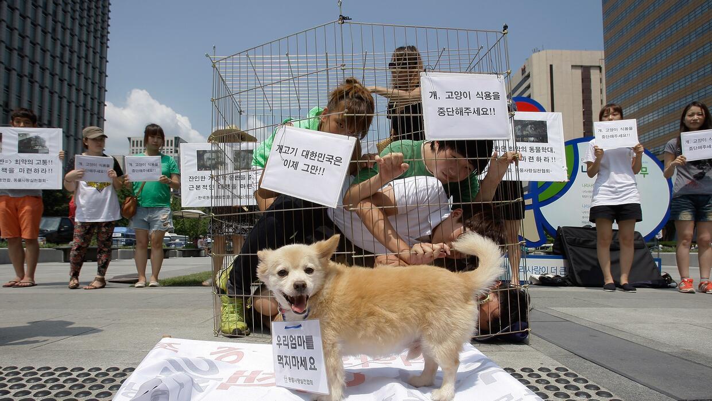 Jóvenes protestan en Seul, Corea del Sur, en contra del consumo de carne...