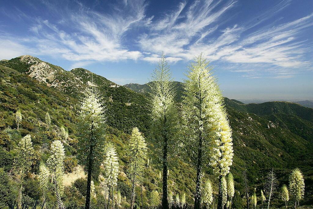 Esto es La Canada, se encuentra en Los Angeles National Forest en el nor...