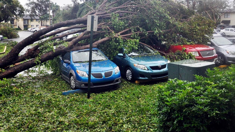 Grupo de vehículos severamente dañado por un árbol caído en una comunida...