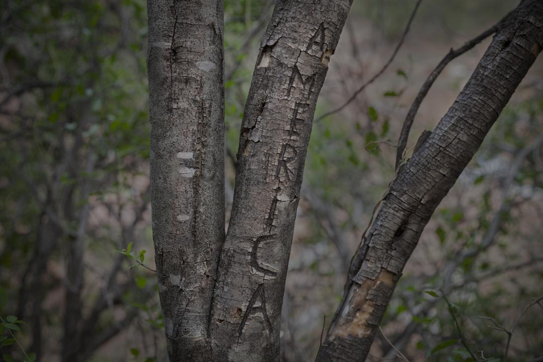 """Un árbol en Arizona lee """"América"""" en la frontera entre Estados..."""
