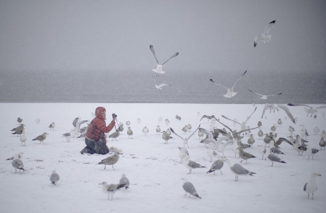 Un niño juega con aves en un congelado Coney Island