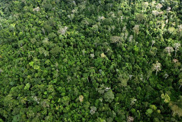Las denuncias añaden que para ser viable, Belo Monte necesitaría de otra...