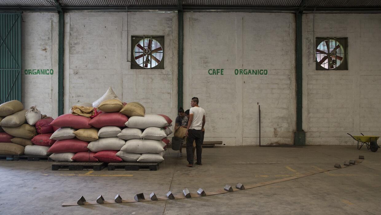 México es el principal exportador mundial de café orgánico. Aquí, un gru...