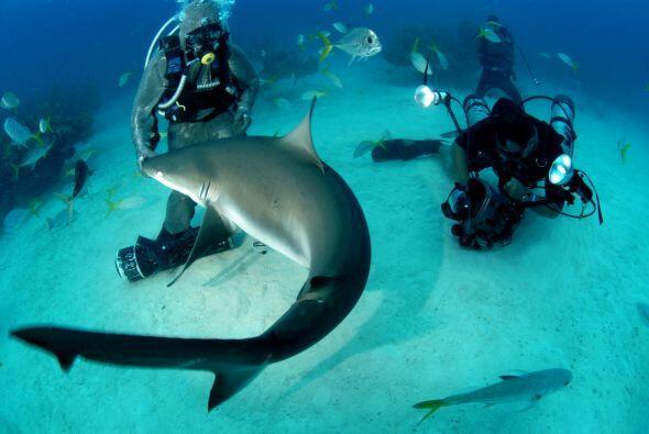 En los arrecifes caribeños de las Bahamas, esta mujer de 42 años atrae a...
