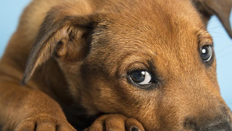 Phoenix a favor de mascotas rescatadas 515218%20(3).jpg