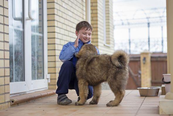 Pese a su tamaño y cierta hostilidad es paciente con los niños, aunque s...