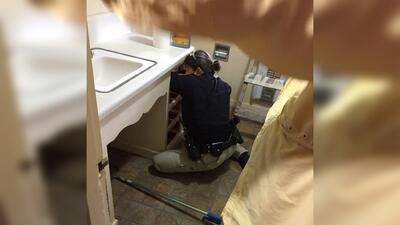 Una culebra de más de 3 pies apareció en un baño en Texas